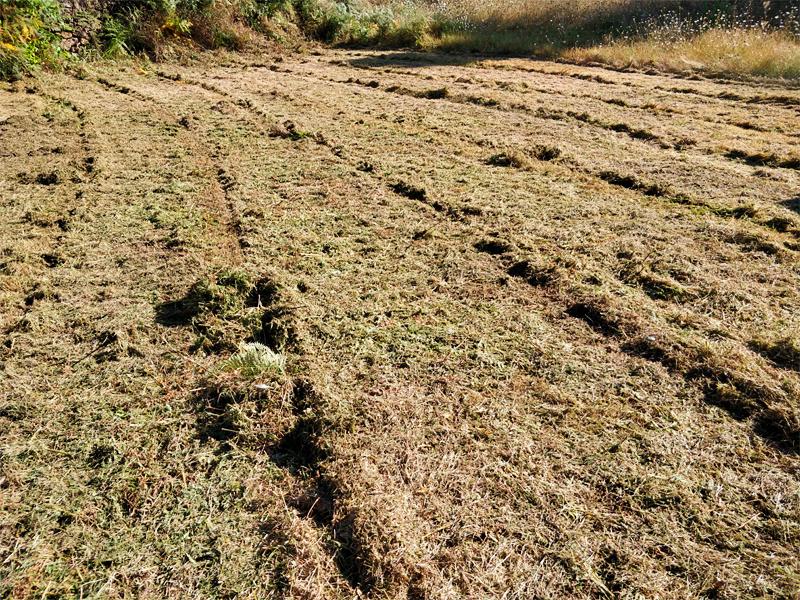 Terreno limpo